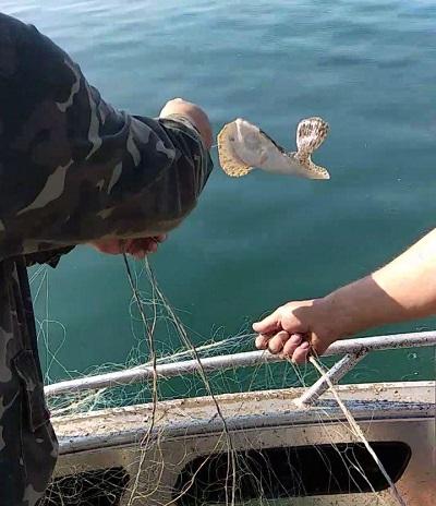За тиждень порушники завдали майже 10 тис. грн збитків, - Азовський рибоохоронний патруль